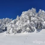 aubrac-randonnee-raquettes-neige-9