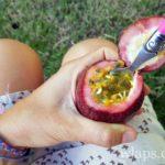 fruit-de-la-passion-fruit-la-reunion-exotique