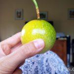 fruit-exotique-la-reunion-fruit-de-la-passion