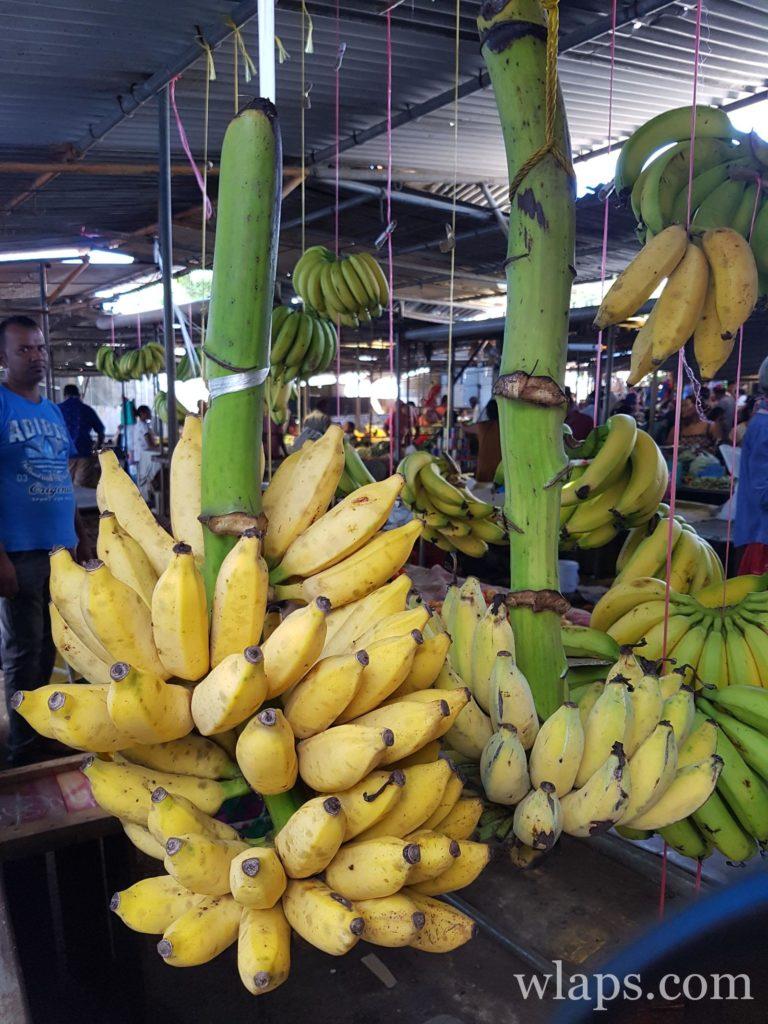 régime de banane au marché de Goodlands à l'ile Maurice : un délicieux fruit exotique