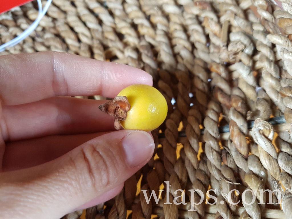 goyaves de chine : un fruit exotique de l'ile Maurice