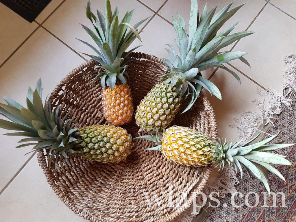Quel fruit à l'ile Maurice je préfère ? un ananas victoria