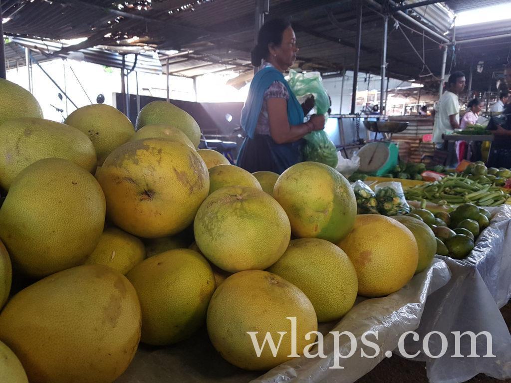 gros pamplemousses : un fruit tropical de l'ile Maurice