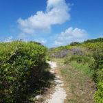 la-plage-naturiste-anse-tarare-guadeloupe-1