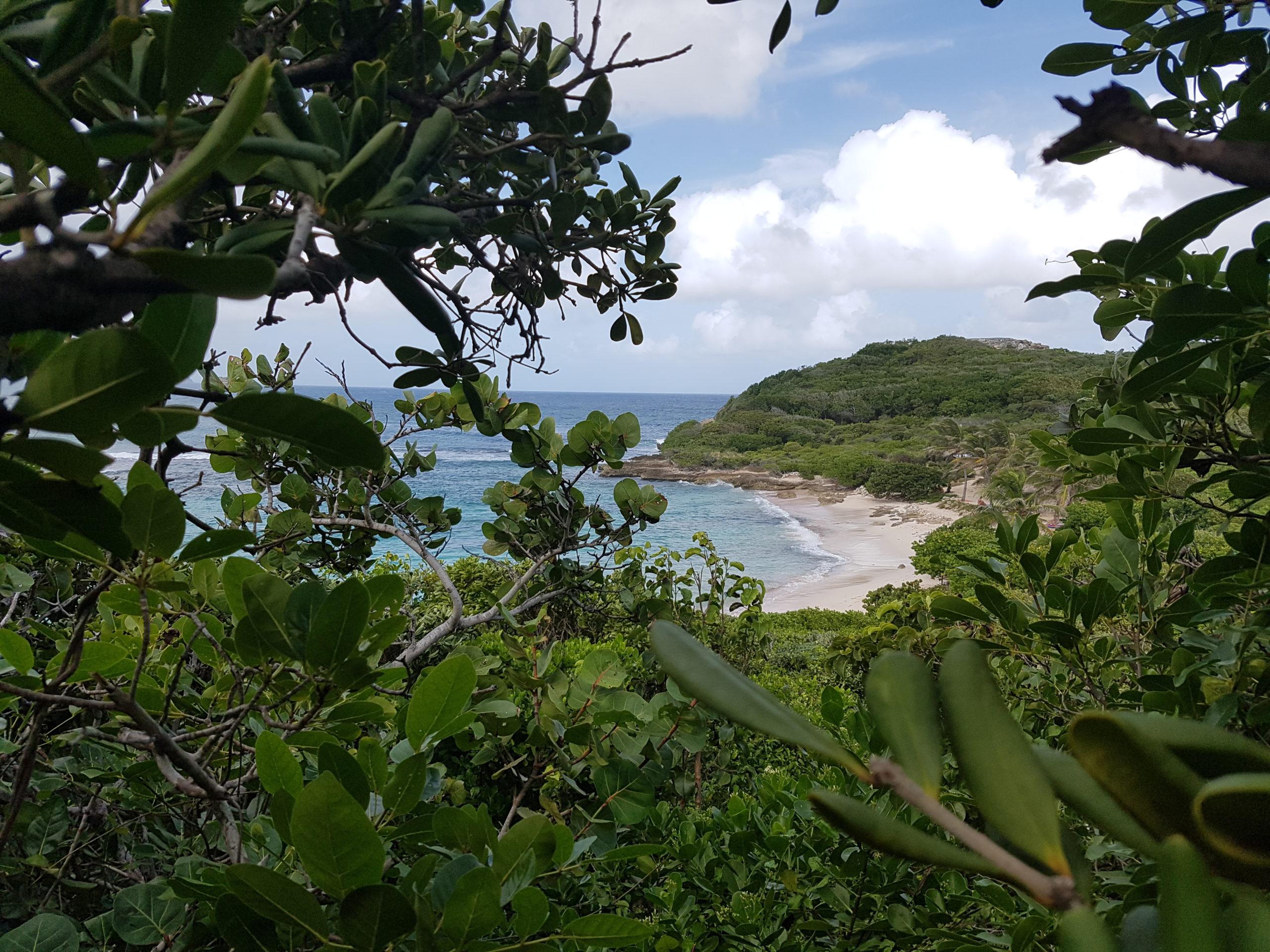 La belle plage naturiste d'Anse Tarare en Guadeloupe