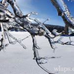 le-plateau-de-aubrac-randonnee-raquettes-a-neige-11