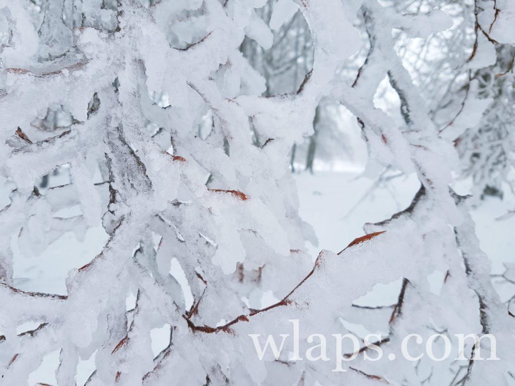 Neige sur arbre