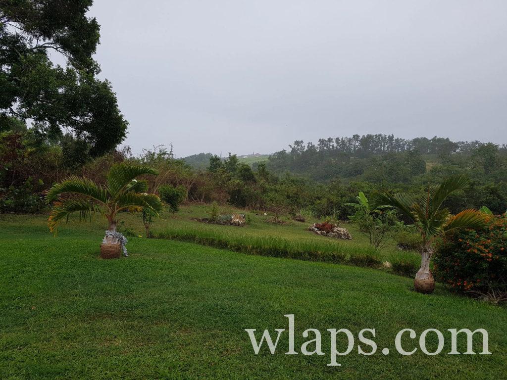 jardin créole sous la pluie à marie galante