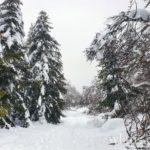 sentier-laguiole-raquettes-neige