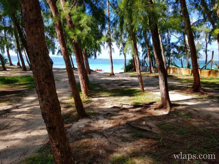 Les filaos et la plage de Belle Mare à l'est de l'île Maurice