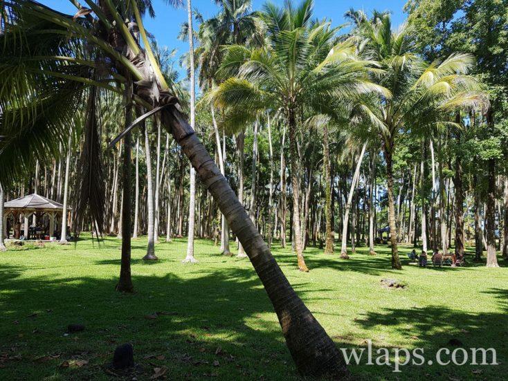 Balade à l'Anse des Cascades à l'île de La Réunion