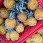 ananas-boule-or-marche-moule-guadeloupe-1