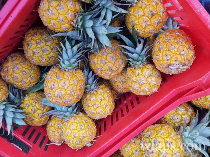 ananas boule d'or de Guadeloupe