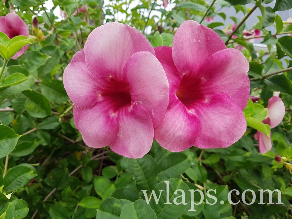De belles fleurs de La Réunion