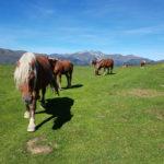 la-randonnee-lac-de-soum-pyrenees-1
