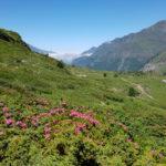 la-randonnee-lac-des-gloriettes-granges-pyrenees-5