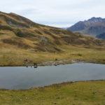 la-randonnee-pic-de-la-montagnette-pyrenees-5