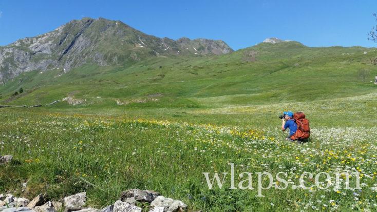 fleurs sur le plateau de Saugué