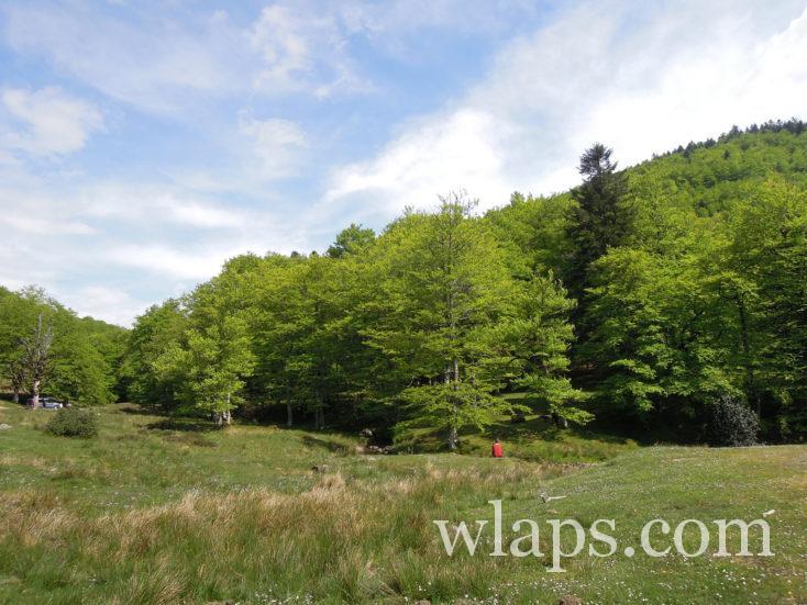 La belle forêt d'Iraty