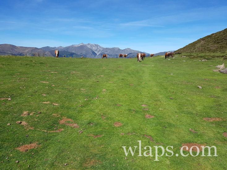Les chevaux près du Soulor