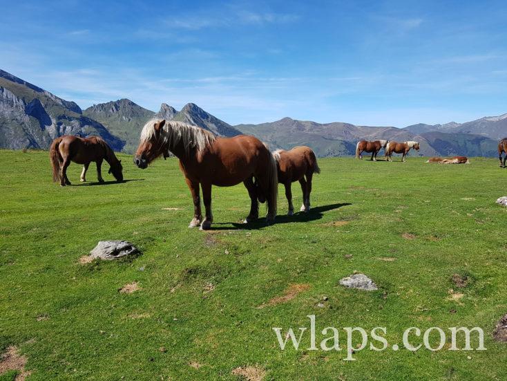 chevaux près du col du soulor