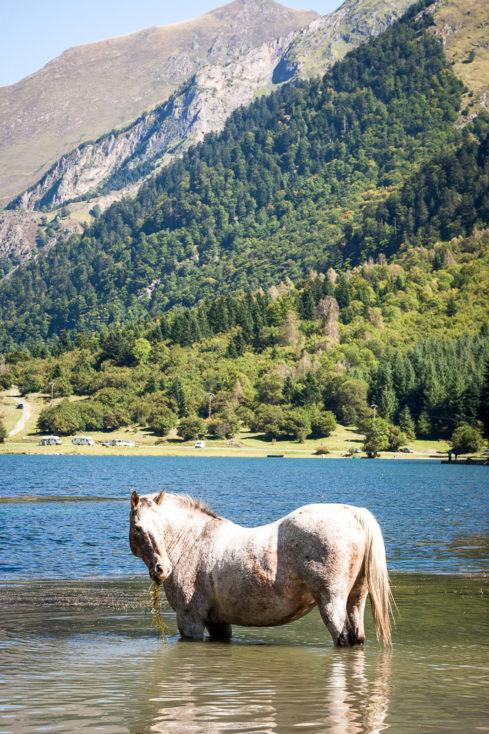 cheval au lac d'estaing