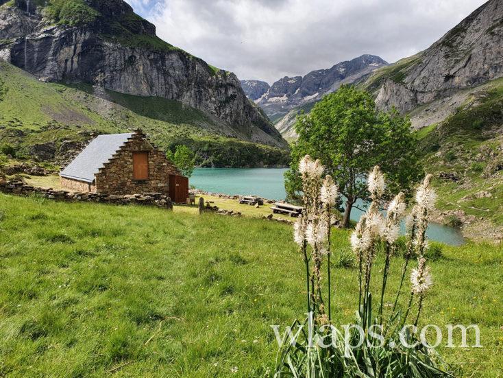le lac des gloriettes et fleurs