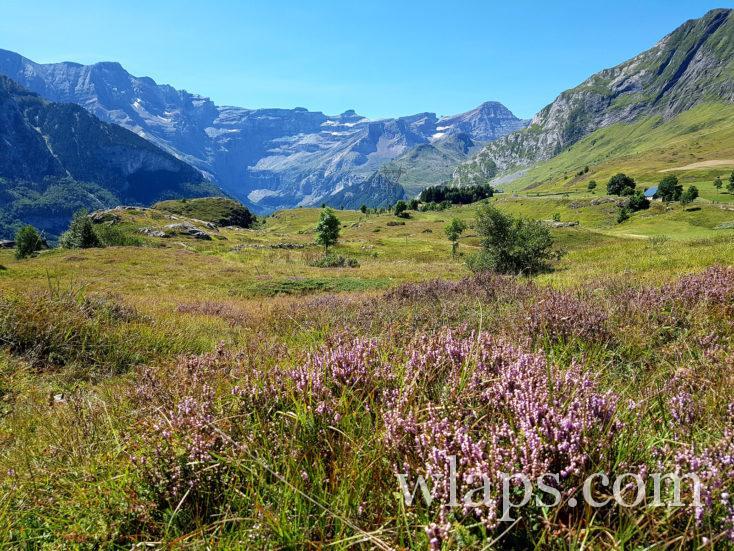 saugué dans les Pyrénées centrales