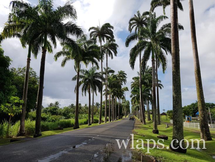 Allée Dumanoir en décembre, une météo avec de la pluie en Guadeloupe aujourd'hui