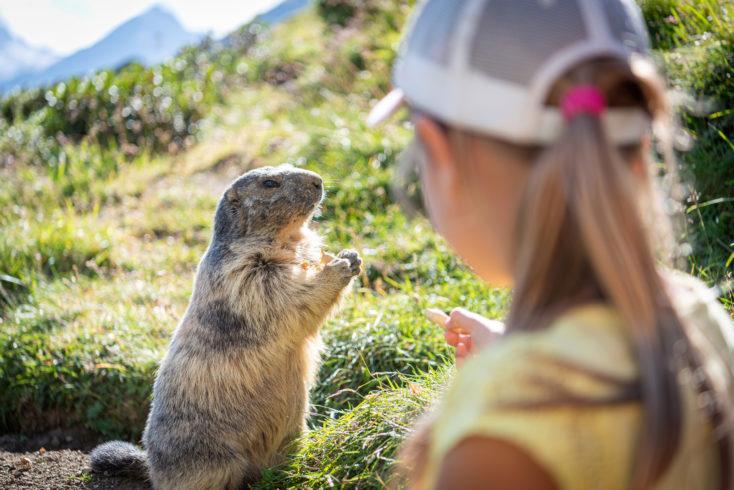 Randonner avec des enfants dans les Pyrénées est l'occasion de croiser des marmottes