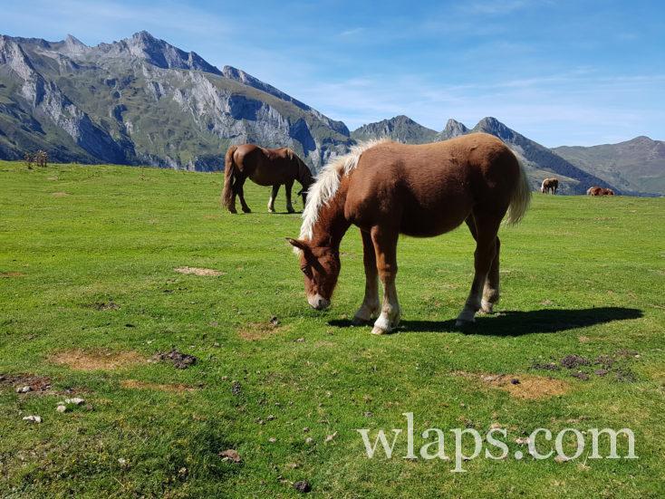 randonnée avec un chien dans le Val d'Azun près du Col du Soulor