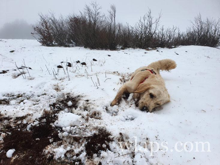 chien qui fait des trous durant une randonnée dans les Pyrénées