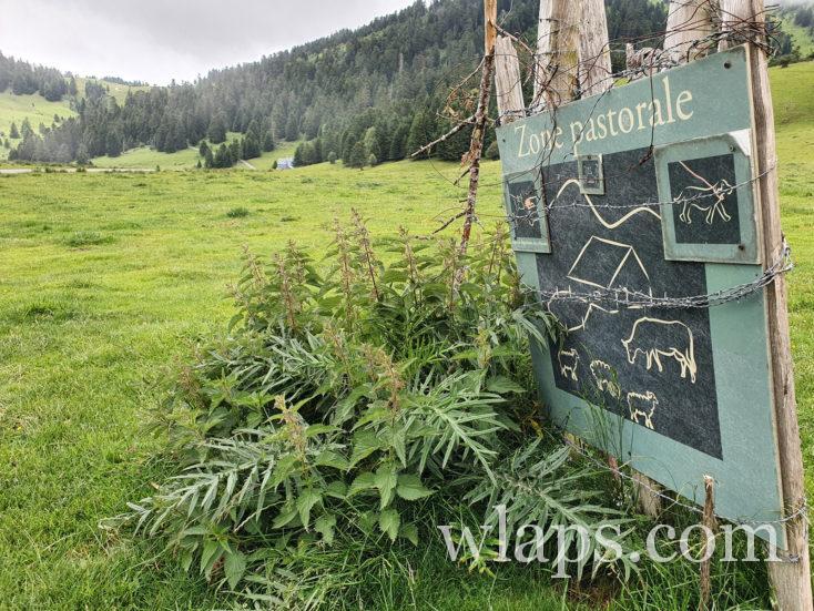 zone pastorale et tenir son chien en laisse durant la balade