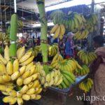 regime-de-bananes-marche-goodlands-maurice